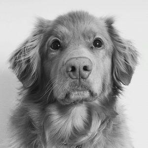 Nelli-koira | Viestintätoimisto Esa Linna PR Services, Jyväskylä  Viestinnän näytteitä 13726782 10153924224288515 1090075761308995434 n 300x300